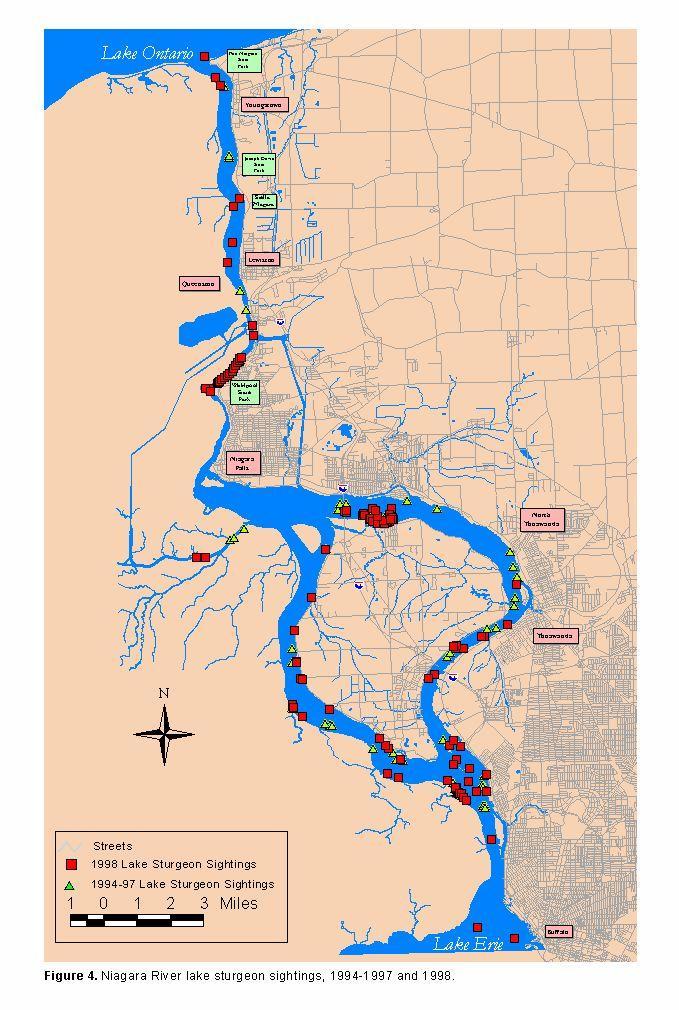 1998 summery mass dive report for Niagara river fishing report